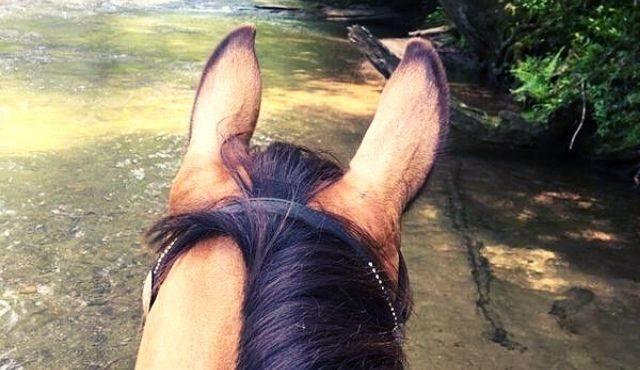 photo of a horse head