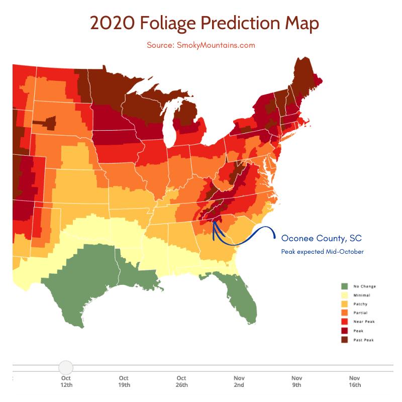 graphic image of 2020 foliage predictor