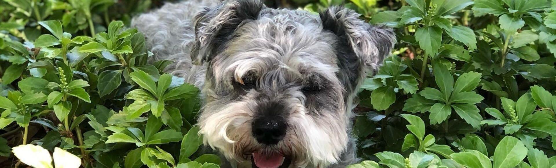 photo of cute dog