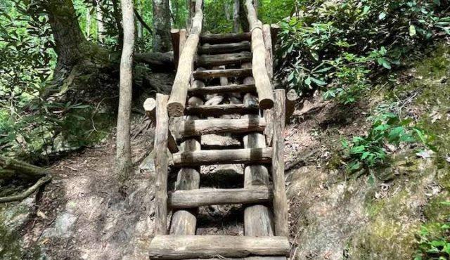 photo of log ladder build on hillside